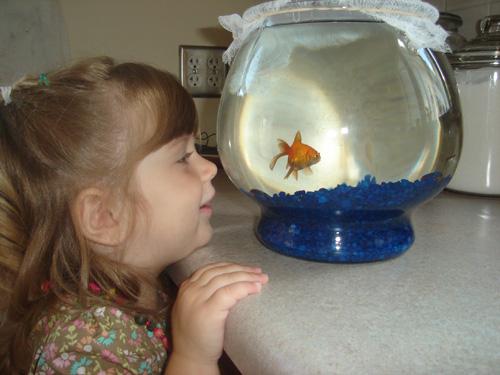 DuckyPipDaisyFish