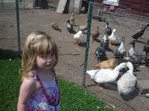 FarmDucks2