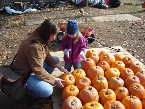 GettingPumpkins3